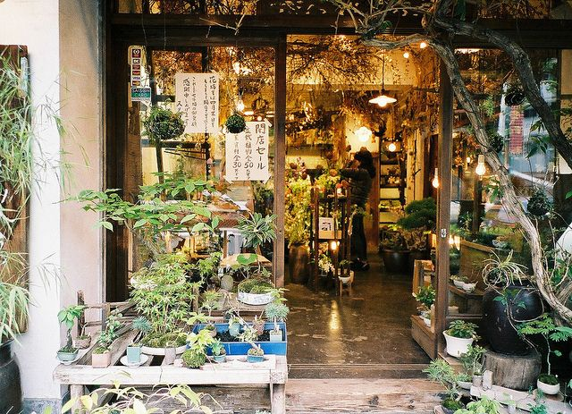 bonsai shop, now closed. by hiki., via Flickr. Photo taken July 8, 2012