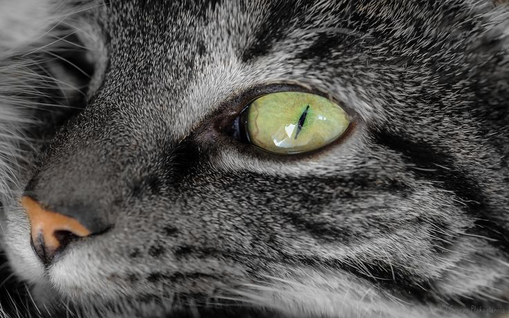 The eye of the King