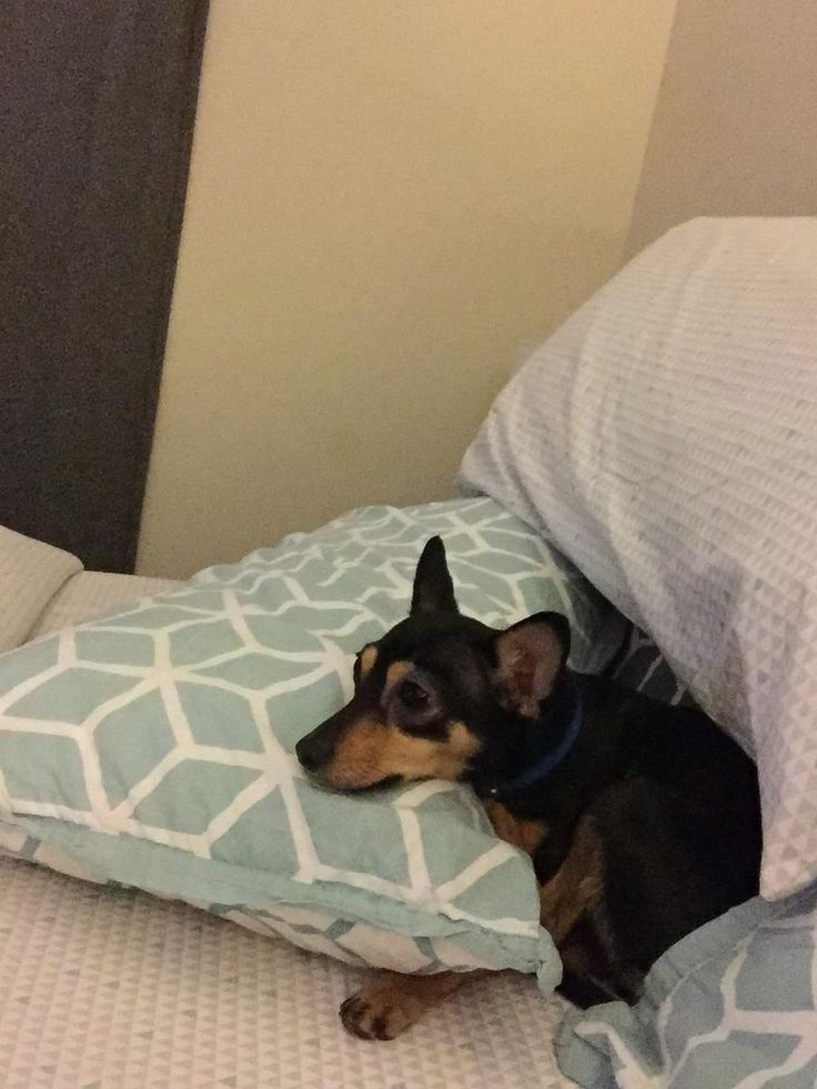 My wife sent me this while working a late shift. That's my baby boy Hero waiting on my side of the bed using my pillow. http://ift.tt/2mXA50f