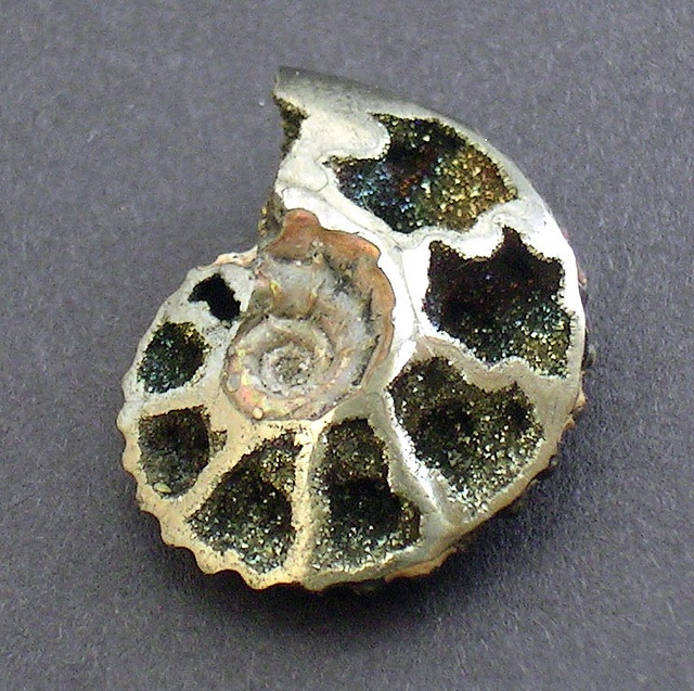 Ammonite with marcasite and pyriteRainbows Colours Marcasite, Willowleaf Minerals, Shiny Things, Gemstones, Pyrite Tiny, Smooth Pyrite, Nature Gem, Girls Stuff, Underside Eroded