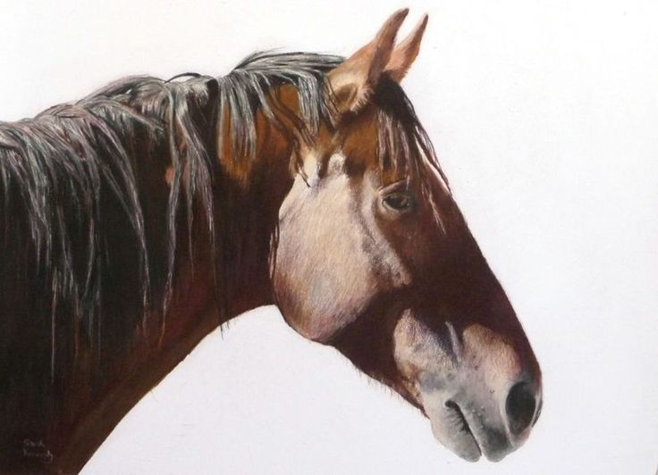 """""""Mustang Spirit"""" by Sarah Kennedy. Pencil drawing on Paper, Subject: Animals and birds, Photorealistic style, One of a kind artwork, Signed on the front, This artwork is sold framed, Size: 60.96 x 50.8 x 3.81 cm (framed), 24 x 20 x 1.5 in (framed), Materials: colored pencil and rag paper"""