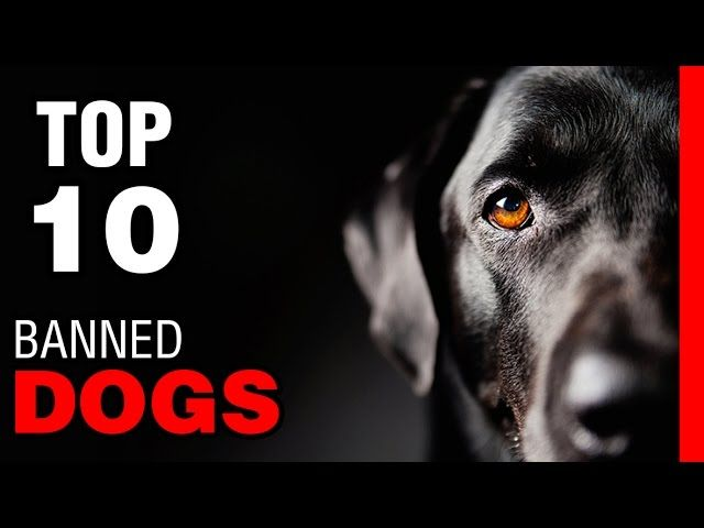nice TOP 10 BANNED DOG BREEDS