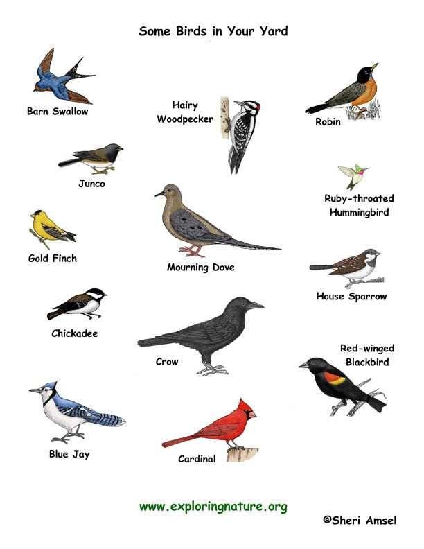 120 best images about unique birds on pinterest. Black Bedroom Furniture Sets. Home Design Ideas