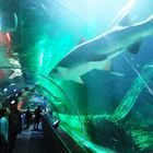 Giant Sea Life aquarium reportedly breaking ground in Metro Detroit today