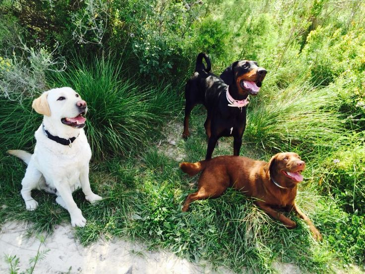 Milo with his best friends