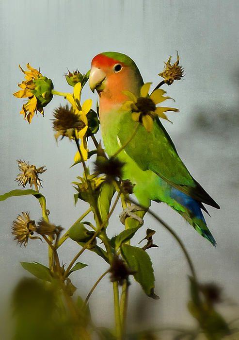 Printed Racerback Top - Lovebirds on Mangoes Tree by VIDA VIDA Buy Cheap Really Sale Top Quality 0nzcNIY