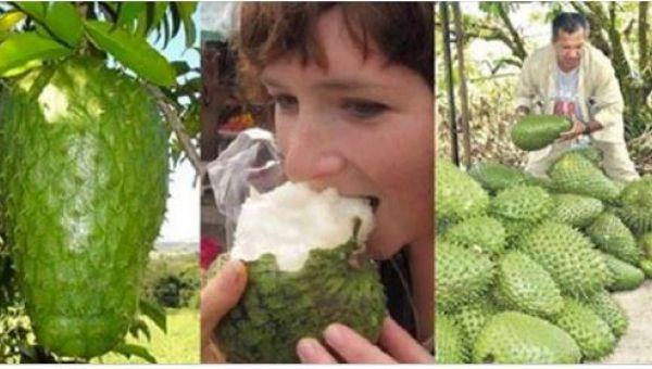 Kemoterápia helyett ezt a gyümölcsöt edd!