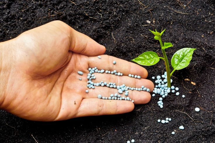 Concimazione La concimazione fa parte di una delle tecniche agronomiche dell'uomo Queste riguardano la sistemazione del terreno e la sua fertilizzazione, in modo da restituire [...]