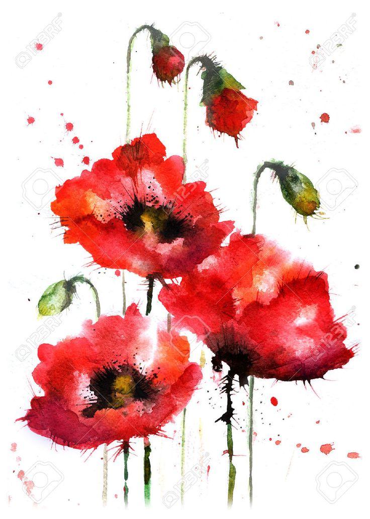 Dibujados A Mano De La Acuarela, Flores De Amapola Fotos, Retratos, Imágenes Y Fotografía De Archivo Libres De Derecho. Image 50752655.