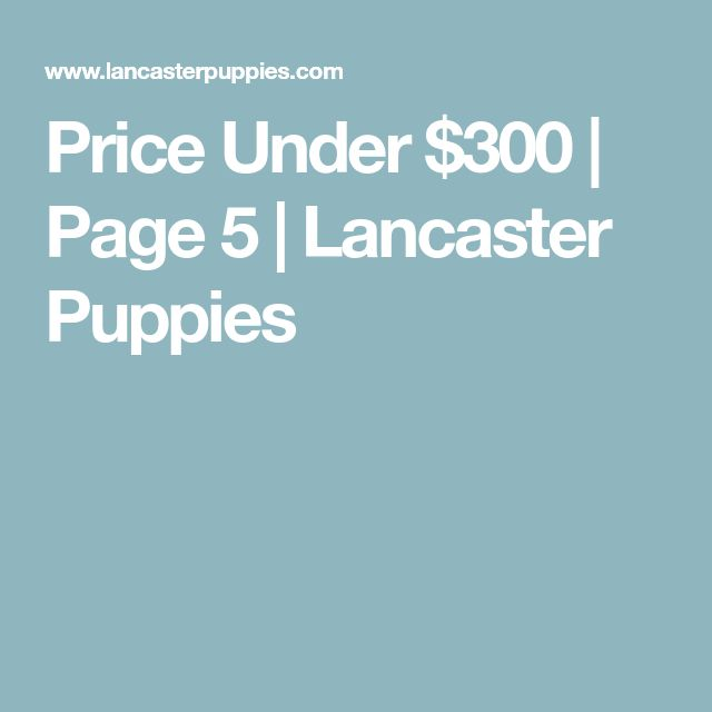 Price Under $300 | Page 5 | Lancaster Puppies