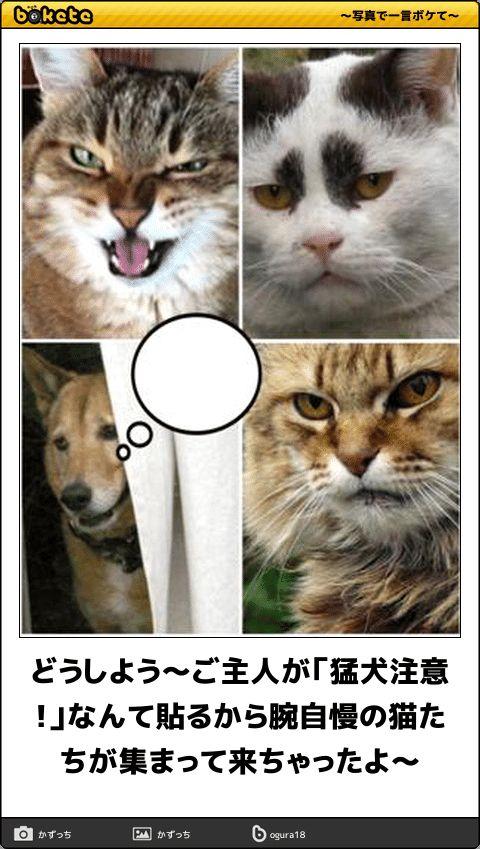 どうしよう〜ご主人が「猛犬注意!」なんて貼るから腕自慢の猫たちが集まって来ちゃったよ〜