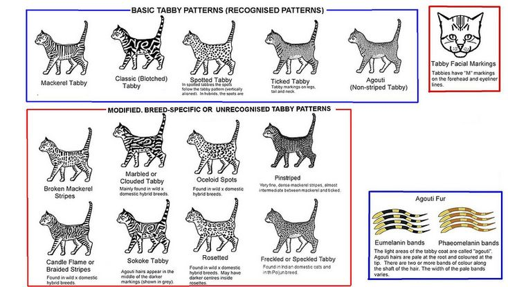 Tabby Types Cat Tail Meaning Cat Colors Cat Pattern