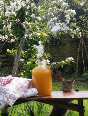 Homemade wine by the apple blossom. Nothing is better than creating it yourself!