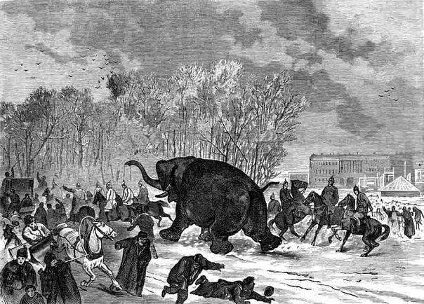 Бегство слона из балагана Роста. «Всемирная иллюстрация», 1874, № 9. Рисунок Н.Н.Каразина, гравюра К.Вейермана.