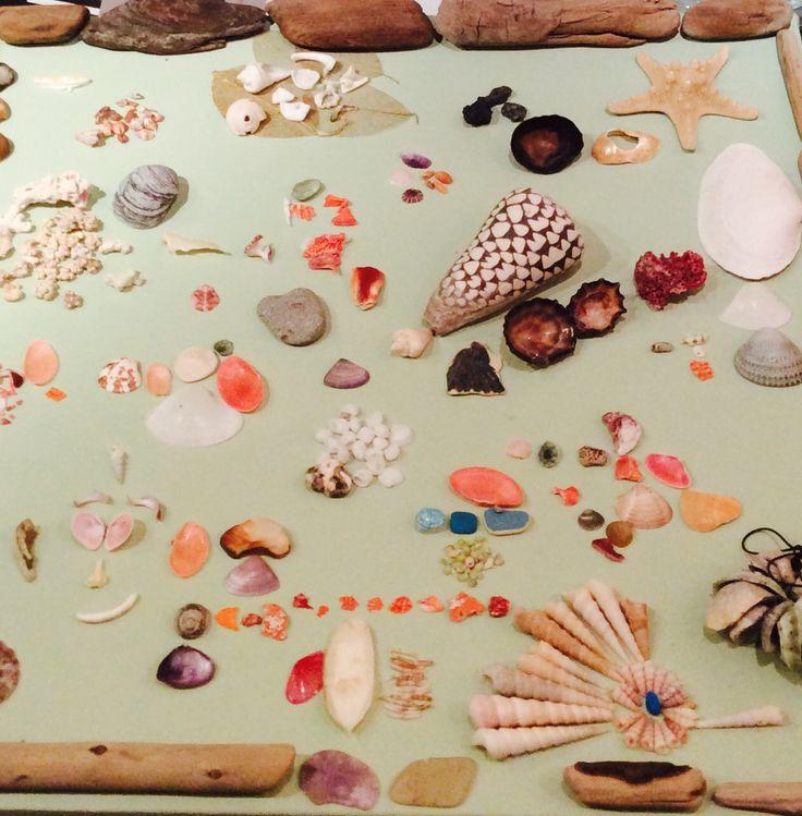 Dieuwertje Kuiper.Schelpen schilderij. Gemaakt van alle strandvonsten vakantie herinneringen Cuba, CostaRica, Malta, Denia, Miami,  Vancouver, Sicilië, Normandië en Nederlandse kust.
