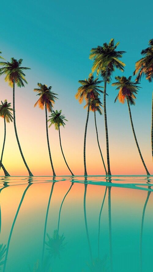 Sunset palms iPhone wallpaper