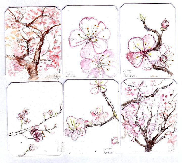 Cherry Blossom by Melba San Martín