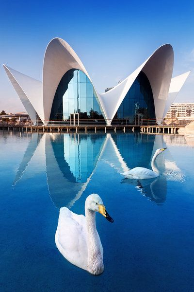 """Oceanogràfic"" (photo by =Nightline) 