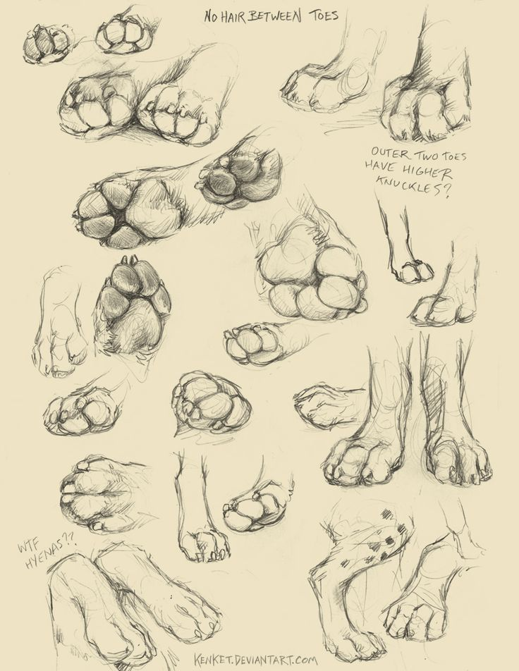 A collection of anatomy and pose references for artists. – Animal Tutorials – #a…