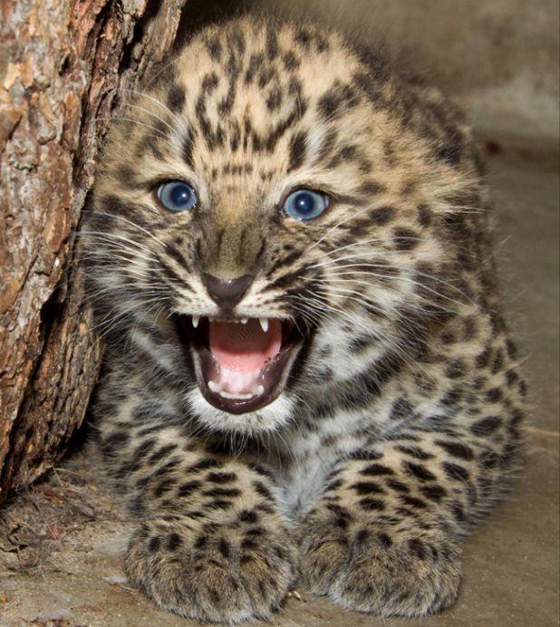 27 Animaux Extraordinaires au Bord de L'extinction | Buzzly