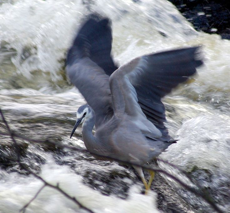 Flitting from one area to another for food