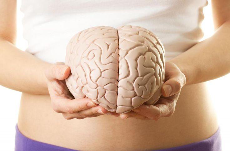 """El segundo cerebro también condiciona nuestra salud. Alojado en los intestinos, podría estar relacionado con enfermedades como el autismo o la osteoporosis.El sistema nervioso entérico o """"segundo …"""