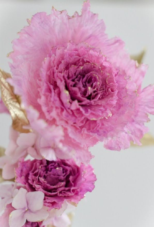 Maggie Austin Sugar Flowers #maggieaustincake