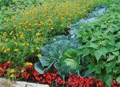 Associations de légumes, plantes et fleurs au potager (mixing veg's and flowers in your potager) oui, oui!