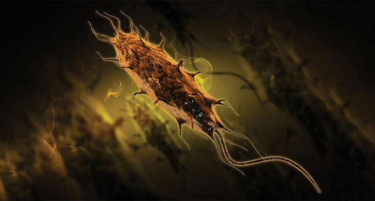 SUPERBUG A strain of E. coli resistant to the antibiotic colistin has infected a woman in Pennsylvania (3-D rendering of an E. coli bacteria shown). ~~ SARANS/Shutterstock