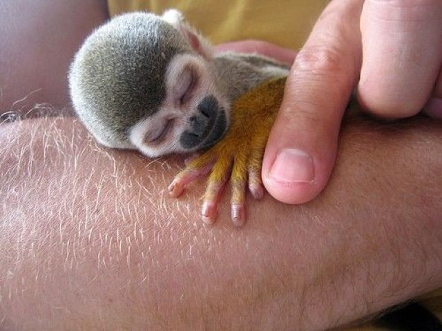 Little oneSquirrels Monkeys, Baby Squirrel, Tiny Monkeys, Creatures, Baby Animal, Baby Monkeys, Sleep Baby, Adorable Animal, Fingers Monkeys