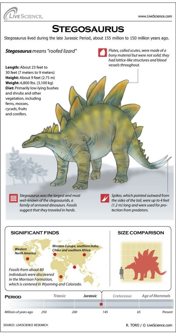 Learn about the plates, bones, habitat and other secrets of Stegosaurus.