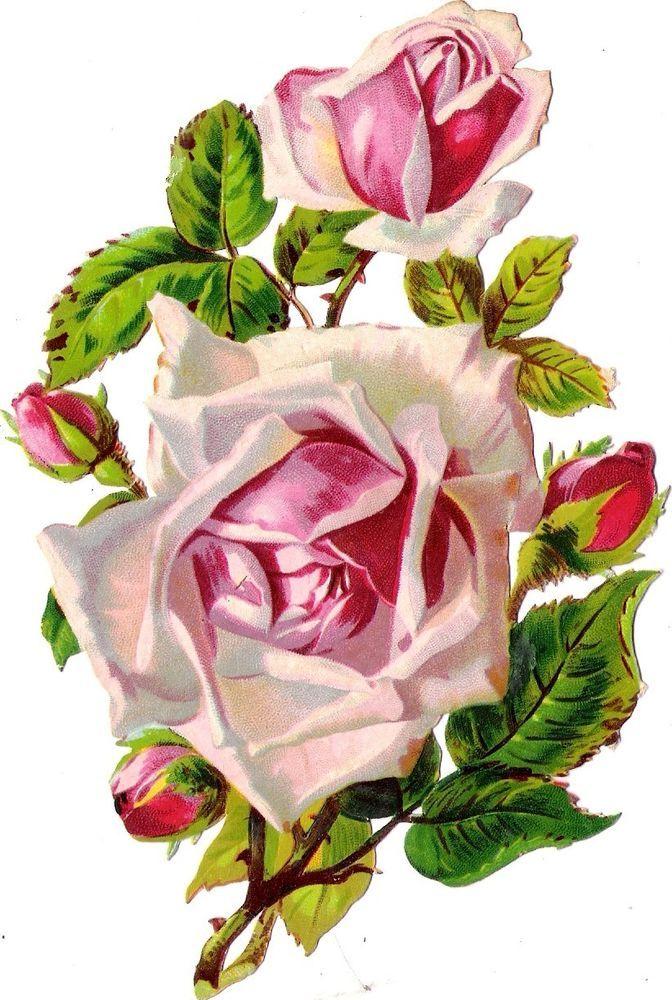 Oblaten Glanzbild scrap diecut  chromo  Rose 16cm  Blume flower fleur: