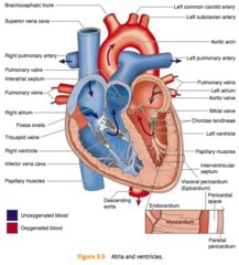 13 best school images on pinterest cardiac nursing circulatory heart parts flashcards quizlet ccuart