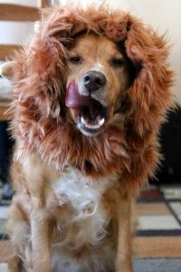 10 Adorable Homemade Halloween Dog Costumes