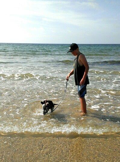 Miss Maddie first visit to the beach # English springer spaniel # 14wks
