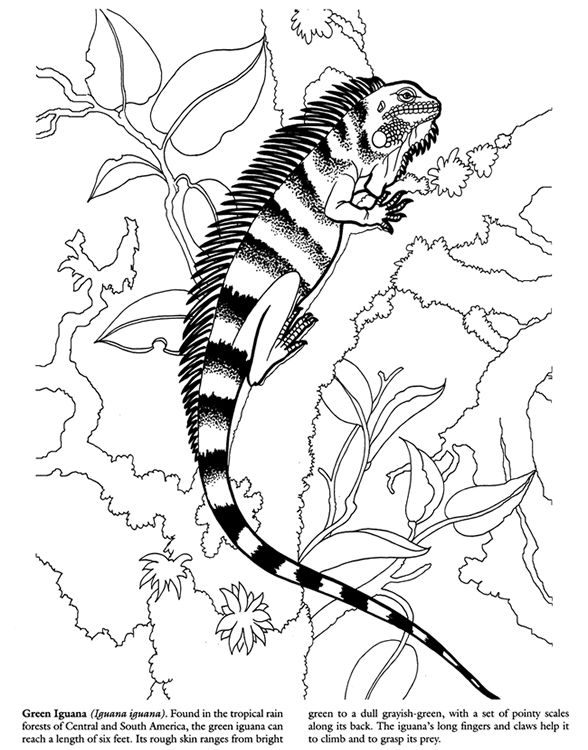 Lizards Coloring Book Dover Publications
