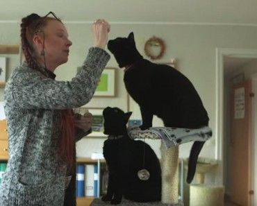 """Scientists from Lund University, Sweden are trying to find out if domestic cats actually do have differing 'dialects' based on their geographical location. They also want to understand if the owner's voice might influence the way cats' meow.  The new research project, """"Melody in human-cat communication"""", is led by researcher Susanne Schötz.   #catsounds #dialects #LundUniversity #Melodyinhumancatcommunication #phoneticanalysis #SusanneSchötz #Sweden"""