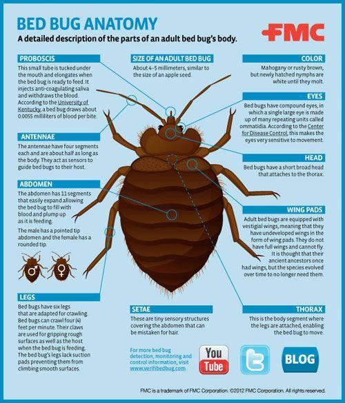 Anatomy of a bug