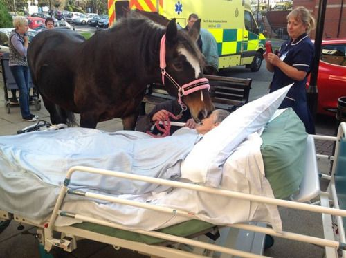 Sheila Marsh's dying wish was to say goodbye to the horse she loved for 25 years. Staff at Royal Albert Edward Infirmary in Wigan wheeled her bed to the car park. Nurse Gail Taylor explains what happened next: The horse, Bronwen, walked steadily towards Sheila. Sheila gently called to Bronwen and the horse bent down tenderly and kissed her on the cheek as they said their last goodbye; Sheila passed away hours later.