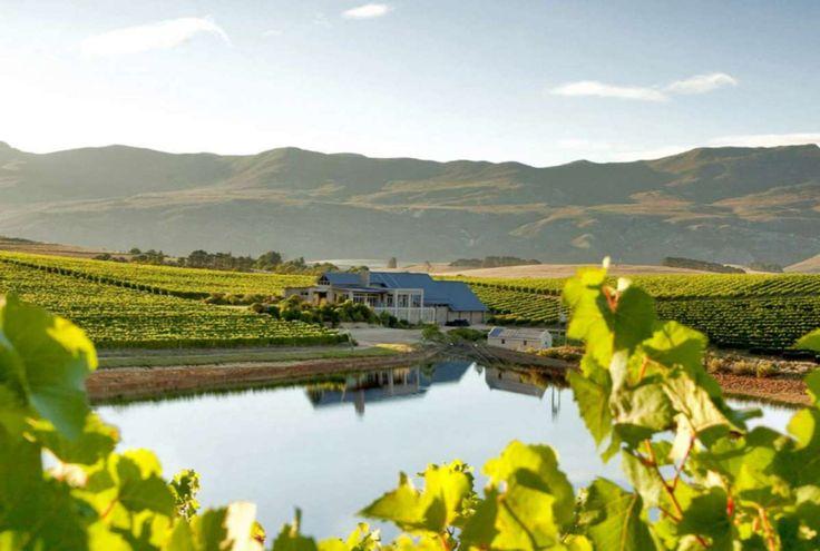 De wijngaarden van Zuid-Afrika (Foto: Emma Blanchard)