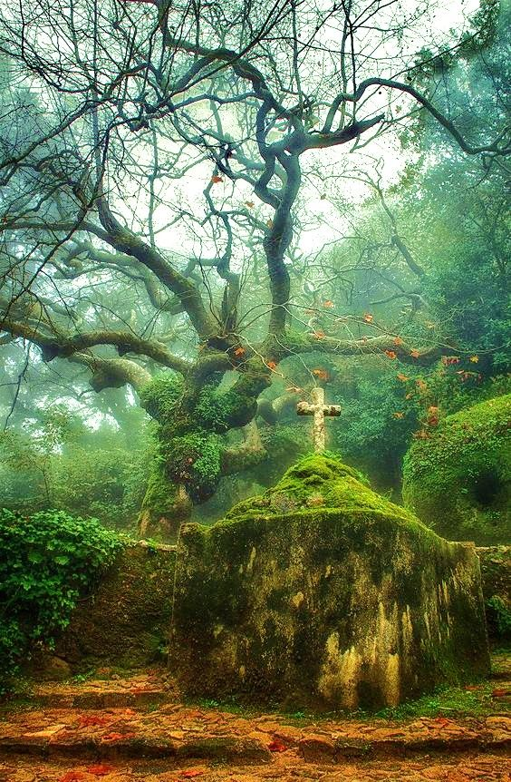Sintra mystical forest - Portugal