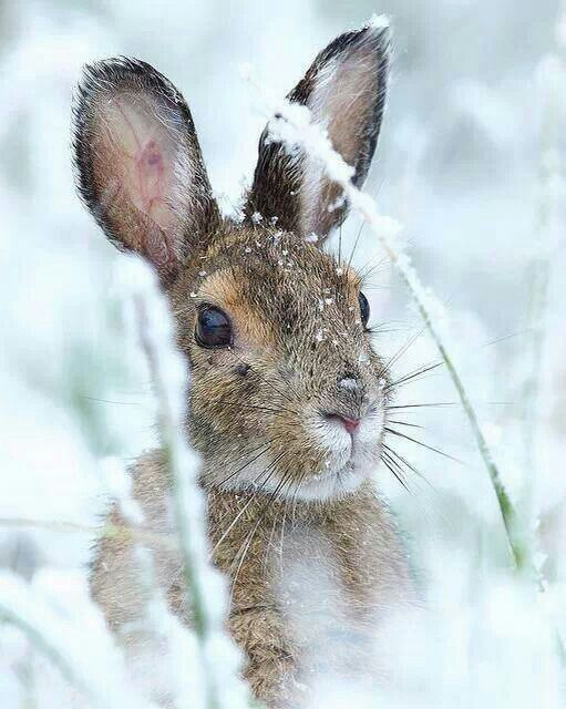 Chilly bunny...so sweet!