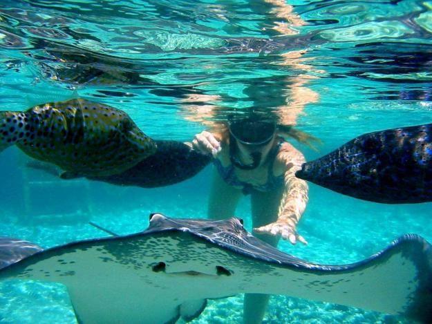 Las mantarrayas es otra de las especies que se pueden divisar en San Andres Islas,Colombia