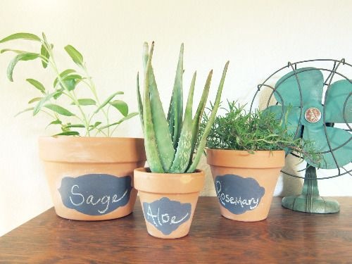I think these would be a good way to kick start my want to develop a green thumb :)