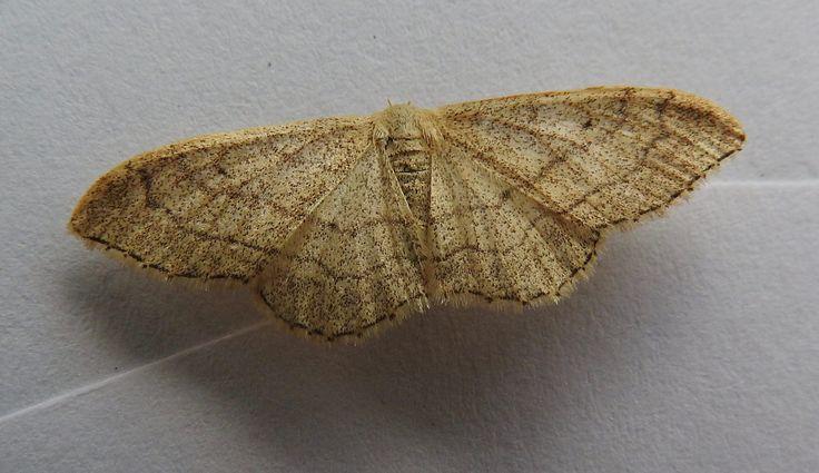 https://flic.kr/p/JH3jmy | Moth | Help ID