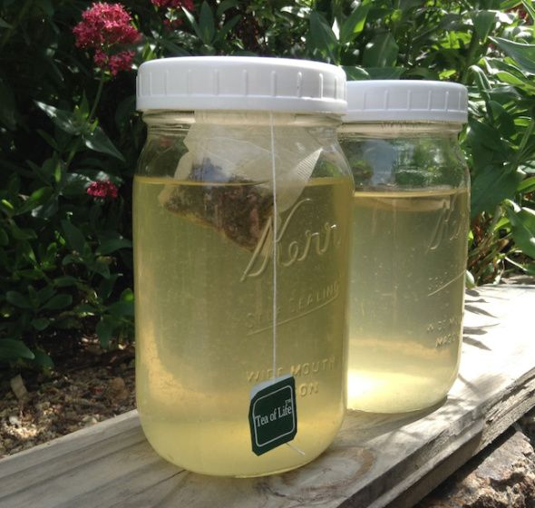 Kefir d'acqua aromatizzato con tè o tisane