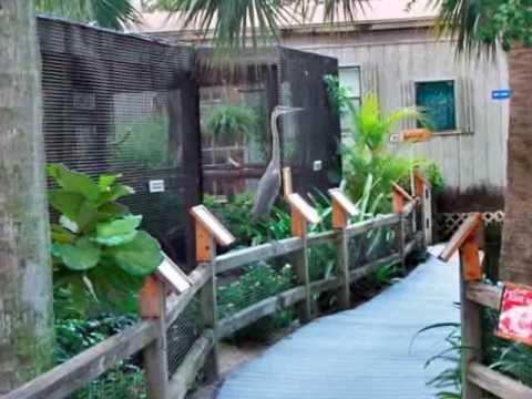 Peace River Wildlfe Center, Punta Gorda, Florida