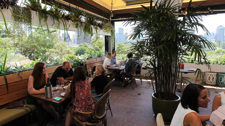 Tropical air: The terrace has great views of the Domain and city skyline. Potts Point, 9th December 2014