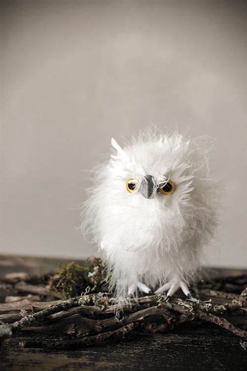 17 best ideas about white owls on pinterest beautiful