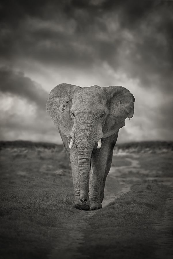 """Elephant Path"" 